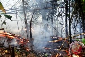 Pemkot Berupaya Padamkan Kebakaran Hutan di Gamalama