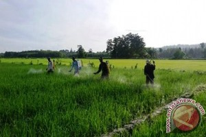 Anggota Kodim 1506/Namlea Terapkan Ilmu Pertanian