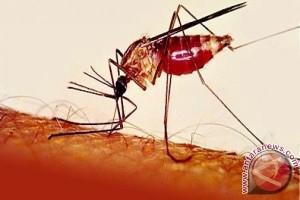 Ternate antisipasi dbd dan malaria