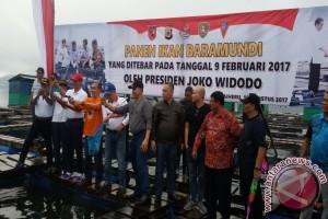 Ikan Baramundi Yang Ditebar Presiden Kini Dipanen