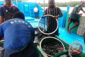 Tim Emas Biru Panen Ikan