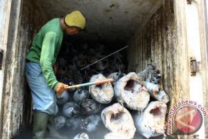 Pemkot Ternate Diminta Bangun Cold Storage