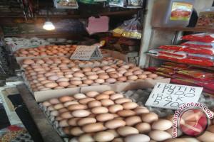 Harga telur ayam ras turun
