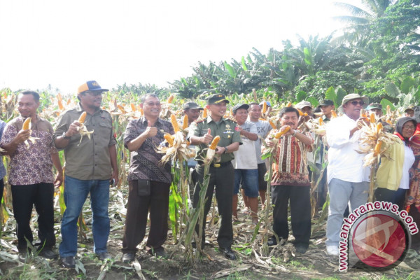 Kodim gandeng Distan kembangkan jagung