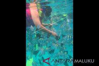 Pemkot Ambon bangun diving center di Nusaniwe