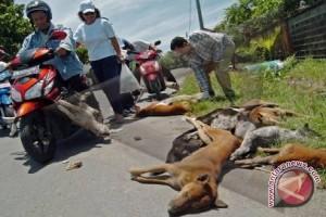 Dinas Pertanian Bangka Mengeliminasi Anjing Liar