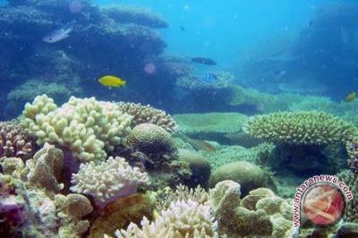 Wisata Belitung Wisata Baru Belitung Timur