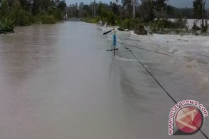Belasan Ribu Ikan Hanyut Disapu Banjir