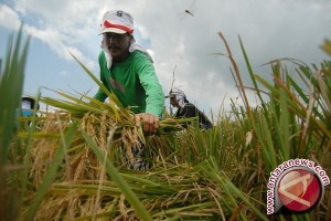 Bupati Minta Petani Manfaatkan Tenaga Penyuluh