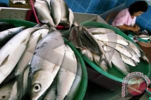 Petani di Toboali Sulit Pasarkan Ikan