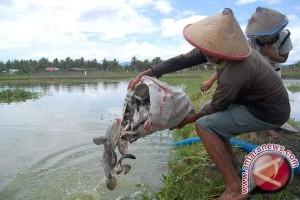 DKP Babel Salurkan Ribuan Indukan Ikan