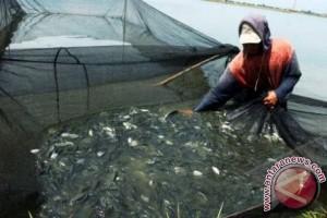 Kadis: Budi Daya Ikan Air Tawar Prospektif