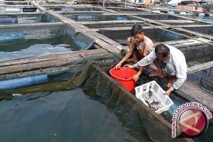 Pemerintah Bangka Dorong Masyarakat Kembangkan Tambak Ikan