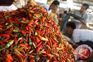 Harga Cabai Rawit di Gorontalo Sentuh Rp140.000/Kg