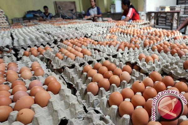 Telur Tercemar Fipronil Ditemukan di Polandia