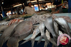 Harga Ikan di Bangka Belitung Turun