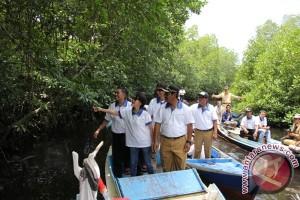 Garuda Indonesia Sumbang 50 Ribu Bibit Mangrove di Belitung