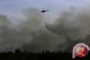 Kebakaran Hutan Melanda Israel dan Tepi Barat