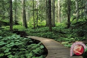 4,1 Juta Hektare Hutan Untuk Reforma Agraria