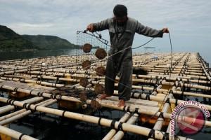 KKP: Budidaya Mutiara Berkelanjutan Dukung Kelestarian SDA