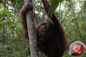 Dunia Internasional Suarakan Gerakan Lindungi Ekosistem Leuser