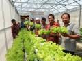Manajer Unit Pengembangan Ekonomi Kantor Perwakilan BI Provinsi Kepulauan Babel, Sudarta melakukan panen perdana sayuran hidroponik di Pesantren Bahrul Ulum Sungailiat, Rabu (5/4). (antarababel.com/Septi Artiana)