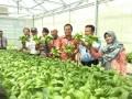 Foto bersama usai panen perdana tanaman sistem hidroponik program sosial Bank Indonesia 2016 di lingkungan Pondok Pesantren Bahrul Ulum (Islamic Centre) Sungailiat Kabupaten Bangka, Rabu (5/4). (antarababel.com/ Septi Artiana)