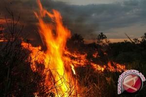 Api Lalap Hutan Seluas 10 Hektare di Bandung