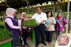 Dinas Pangan Kabupaten Bangka Panen Cabai di Lingkungan Kantor