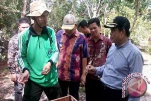 Pemkab Bangka Tengah Bangun Hutan Wisata Madu Kelulut