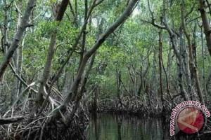 Hutan Mangrove Kabupaten Bangka Tengah Mulai Digemari Wisatawan