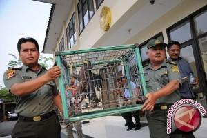 PPSC Sukabumi Lepasliarkan Elang Sitaan