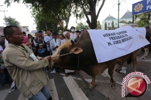 Presiden Kirim Sapi Kurban Satu Ton ke Padang