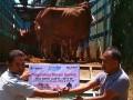 Unit Produksi Laut Bangka (UPLB) dan Mitra KIP PT Timah (Persero) Tbk saat menyerahkan hewan kurban pada Perayaan Idul Adha 1438 H di Pangkalpinang, Sabtu (2/9/2017). (antarababel.com/Aprionis)