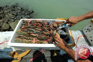 Polisi Tarakan Gagalkan Penyelundupan 3 Ton Kepiting Bertelur ke Malaysia