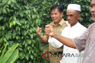 Pemkab Bangka Tengah dorong petani lada gunakan junjung hidup