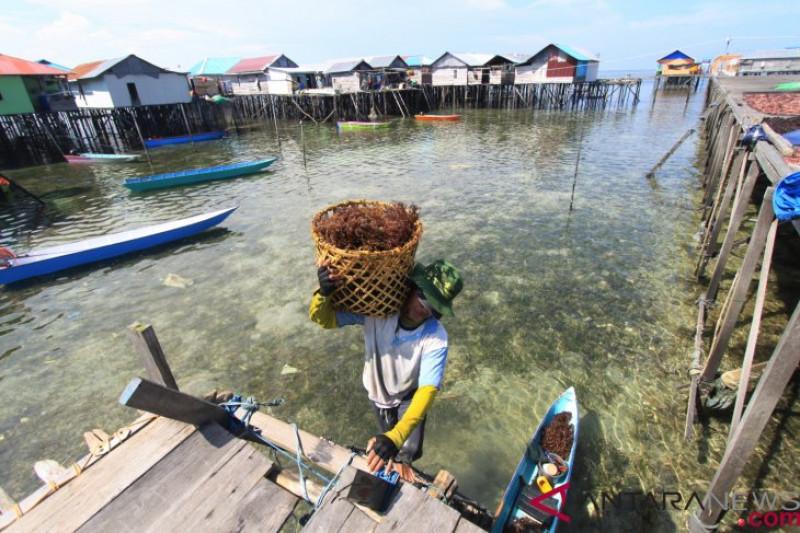 Komoditas Rumput Laut di Kampung Terapung