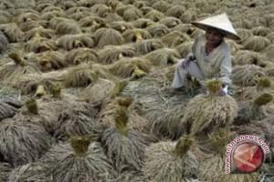 Bali Targetkan Produksi Padi 850.000 Ton