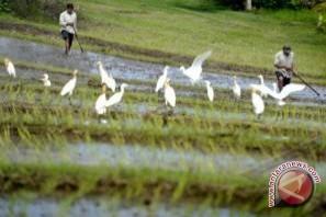 Peneliti Unud Ikut Majukan Pertanian