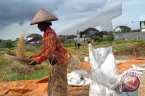 Bulog Bali Miliki Stok 5.925 Ton Beras