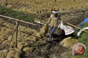 Bali does not need to import rice: official