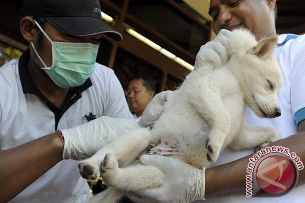 Dispar Badung Bantah Isu Penjualan Daging Anjing