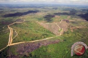 DPRD Buleleng Dorong Hutan Selat Jadi Objek Wisata