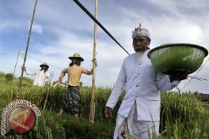 Petani Bali Cintai Sawah Warisan Leluhur