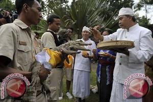 """""""Bali Zoo"""" Gelar Ritual """"Tumpek Kandang"""""""