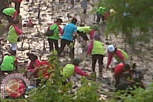 70 Percent Mangrove In Indonesia Damaged: Expert