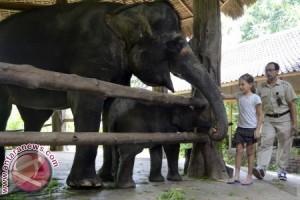 BSMP Perkenalkan Anak Satwa Langka Kepada Pengunjung