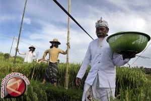 Pemkot Denpasar Lestarikan Subak Dengan Proklim