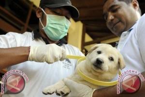 Disnak Bali Siapkan 200.000 Kalung Anjing