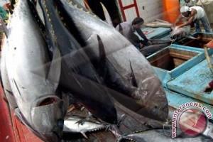 Ekspor ikan dari Bali meningkat 34,77 persen